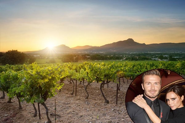 David Beckhm gifted his wife winery